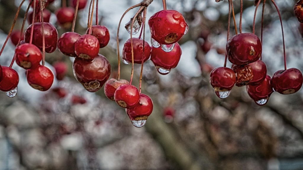 Crab Apples by John Campion.